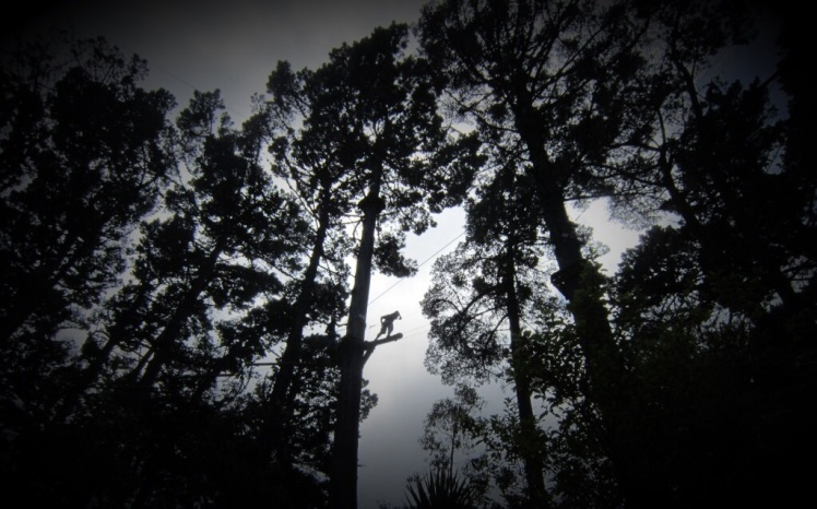 Adrenalin Forest, Wellington
